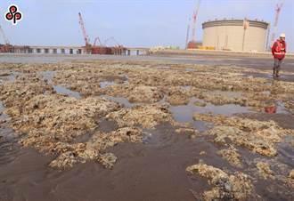 疫情不减护藻礁热情 15场线上讲座今起开跑