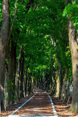 防疫期間 茂管處帶您線上遊茂林