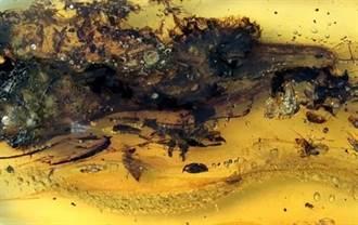 去年琥珀裡的有齒小鳥 現在正式認定是蜥蜴