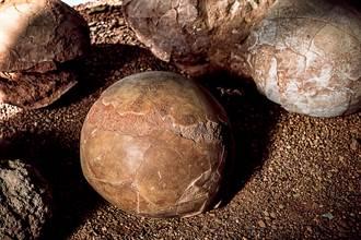 機場包裹發現詭異圓形物體 海關拆開驚見1億年前恐龍蛋