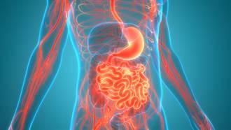 預防失智 從強化這個器官開始就對了