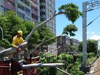 台鐵桃園內壢區間路樹倒鐵軌 影響755名乘客