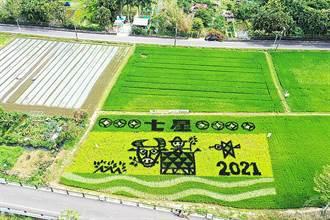北投關渡彩繪稻田如一片美麗綠色地毯 線上「找稻田」趣