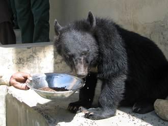 影》熊出沒注意 日札幌出現熊與裸男奔跑街頭