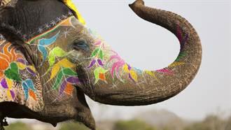結婚找大象助陣!一放炮牠掀屋翻4台車 瞬間暴走變鬧劇