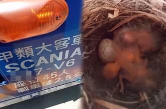 沒生意慘況曝光 遊覽車輪胎驚見鳥巢還孵化了