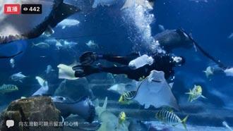 遠雄海洋公園端午直播 30萬人觀看