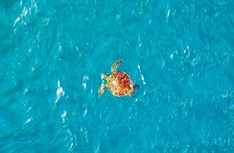 基隆外木山人潮退散 萌海龜出沒