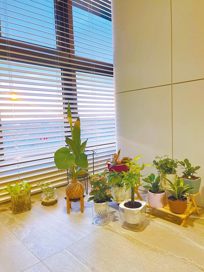 Selina近來購入許多不同的盆栽,開心地逐一擺放在家中。(摘自臉書)