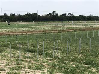 吃出健康和安全 金門成立首座有機農業集團栽培專區