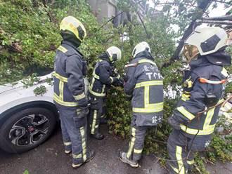 車停路邊在車內休息 路樹突倒塌駕駛受困