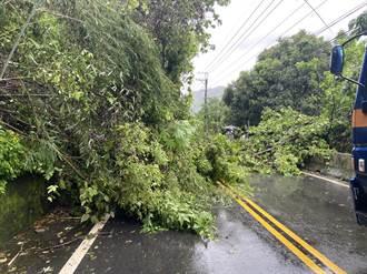 豪雨狂炸台中 山區、海線發生多起路樹倒塌