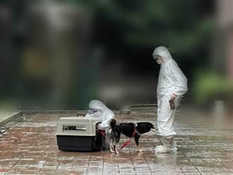 基隆寵物銀行暖心代養 確診者出院開心接回愛犬
