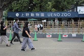 日本上野動物園喜訊 大貓熊真真產下雙胞胎