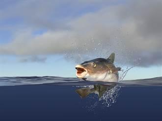 釣客捕鱈魚發現腹部異常腫脹 打開魚嘴驚見恐怖一幕