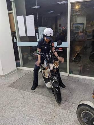 公柴犬跳上美女警機車 機伶「報警」找主人