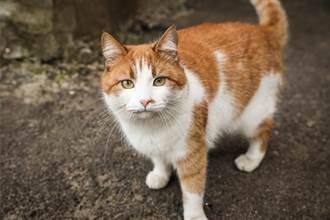 流浪貓全身是傷 跳上窗台向人求救 靈性舉動住戶狂讚聰明