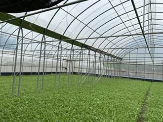 菜價受疫情天氣影響 農民心情三溫暖
