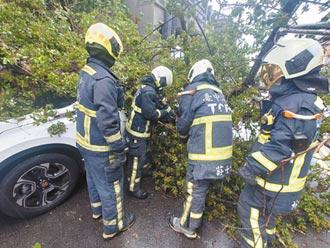 雨灌台中 路樹倒塌駕駛受困