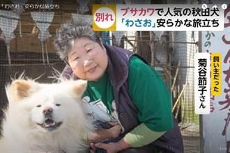 青森人氣明星狗Wasao醜得可愛成傳奇