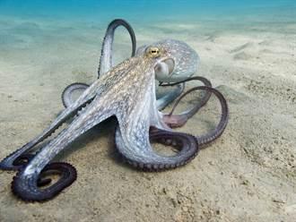 32隻腳異形章魚被捕獲 腿呈樹枝狀散開 漁民全嚇傻