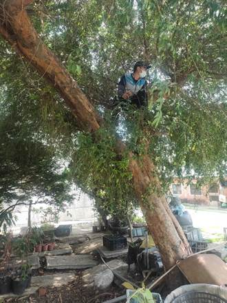 惡犬咬傷女童 嘉義縣動保員為成功捕捉埋伏樹上3小時