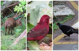 三級警戒至7/12 各森林遊樂區繼續封 園區成為動物天堂