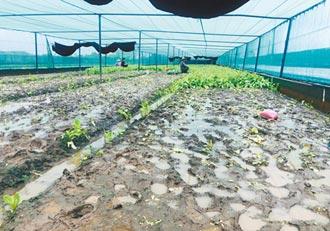 疫情天氣影響菜價 雲嘉農民心情三溫暖