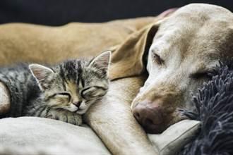 貓伴失明狗8年 進收容所仍堅持相守 患難見真情網淚崩