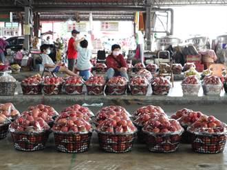 台南玉井芒果產季 批發市場無人潮 果農悶的發慌