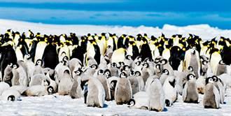 看企鵝的日子 跟著探險家的腳步呼吸南極