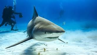 12歲少年衝浪遇公牛鯊!淡定站起身  小腿肚竟消失了