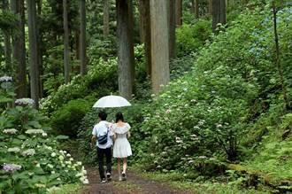 岩手期間限定 日本最大繡球花園 有4個東京巨蛋那麼大