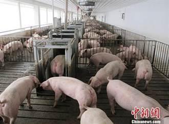 豬價狂跌 陸發改委啓動豬肉收儲穩價
