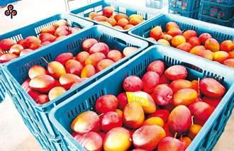 今年芒果產量大增3成 農委會推網購促「全民吃芒果」
