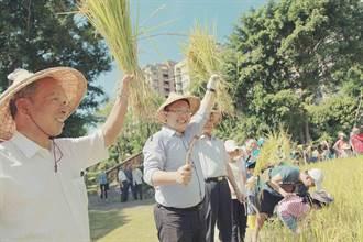 依時而作 台北客家農場割禾謝豐收