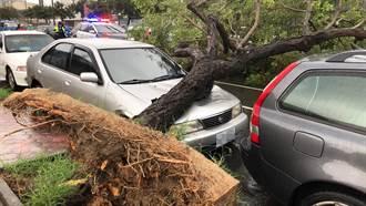 連日大雨 台中大里文心南路路樹倒 壓毀路邊汽車