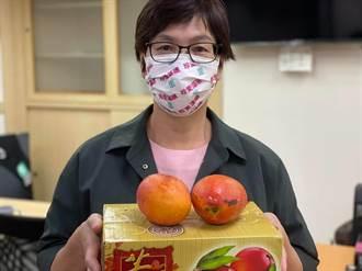 吃芒果會傳染Delta病毒?「屏東女兒」蔡壁如霸氣訂150箱破謠言