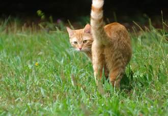 見肥貓過街脫口一句「好胖」 下秒竟遭怒視她嚇壞急道歉