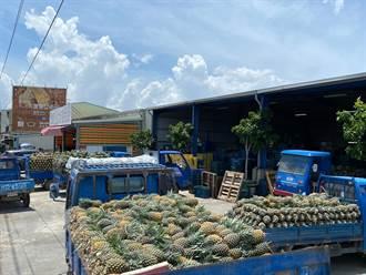 農民排隊交鳳梨 天氣、疫情影響價格疲軟