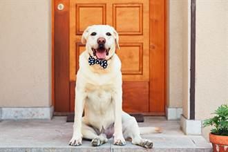 寵物狗被煙火嚇壞逃家 主人慌到哭 半夜聽到門鈴聲傻了