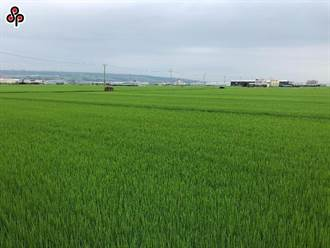 農業保險基金今起正式運作 試辦至今投保覆蓋率達22%