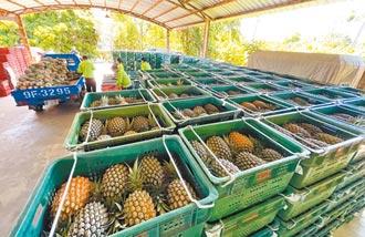 北農鳳梨均價13.8元 賣1顆賠1顆