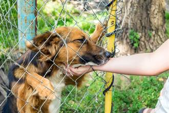 想領養收容所新狗 女驚見失蹤2年愛犬 認主反應超催淚