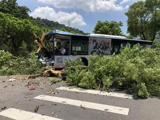 士林公車失控撞倒2路樹車頭貫穿 駕駛受困7人受傷