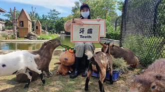 線上遊「遊樂園」 六福村、遠雄海洋公園開免費直播