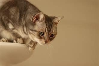 還站不穩就想跳 貓媽媽環抱幼崽急護子 母愛行為暖爆