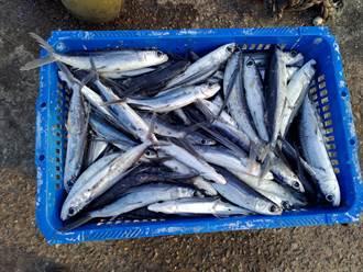 北台灣唯一馬崗漁港飛魚船隊 漁民跟上宅經濟風潮