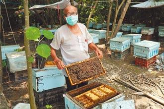 養蜂40年 老蜂農蜂蜜再奪特優