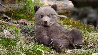 動物園關閉被領養 棕熊入住莊園泡玫瑰浴 網笑:比我爽